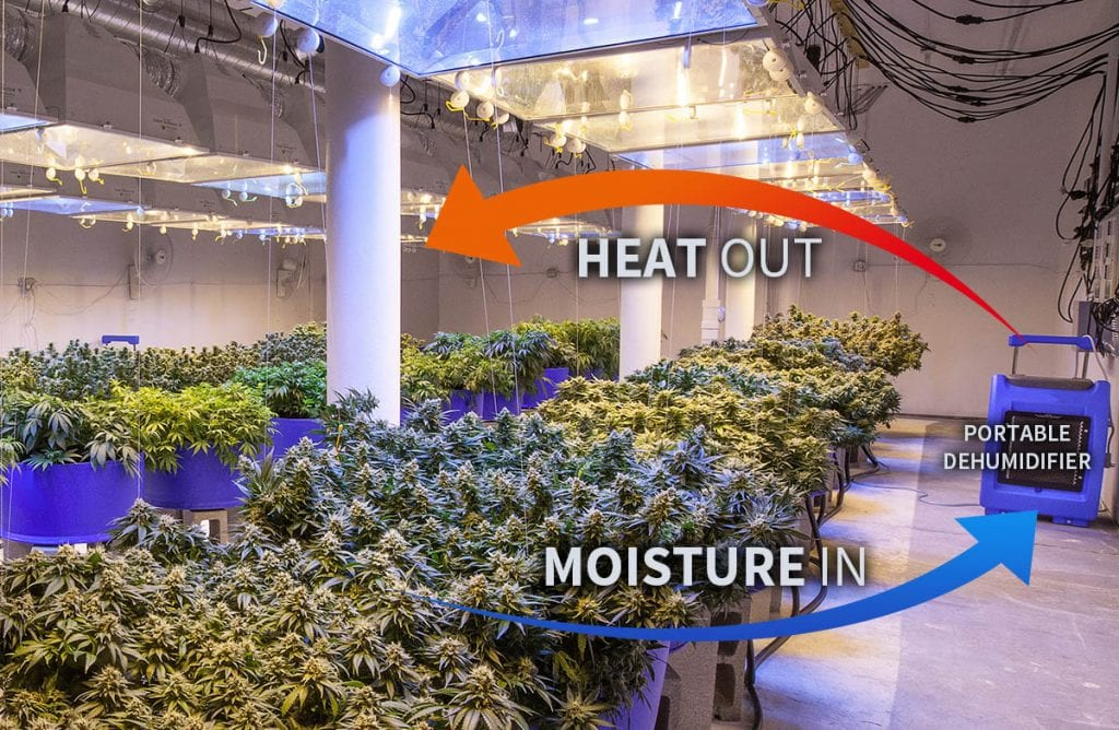 missouri cannabis grow dehumidifier