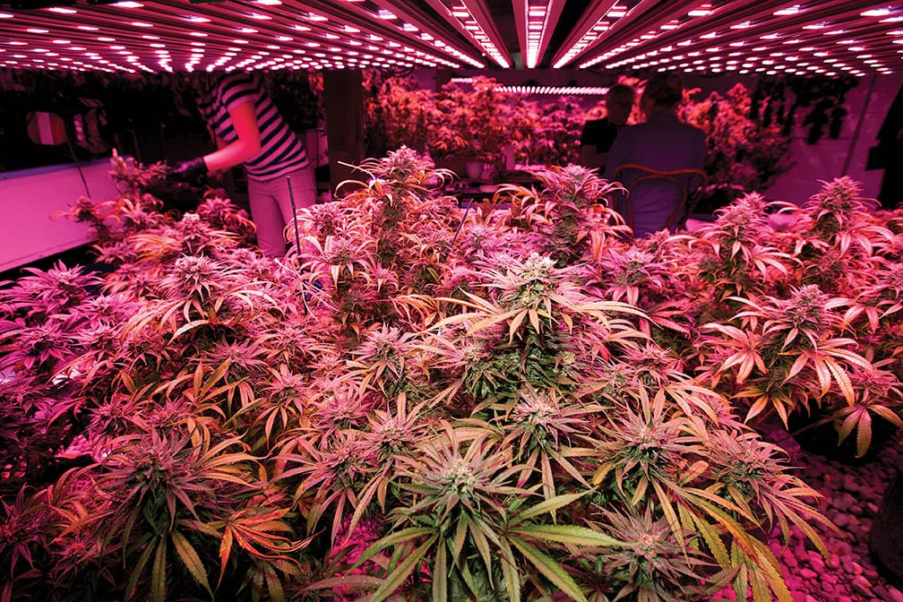 missouri cannabis grow lighting