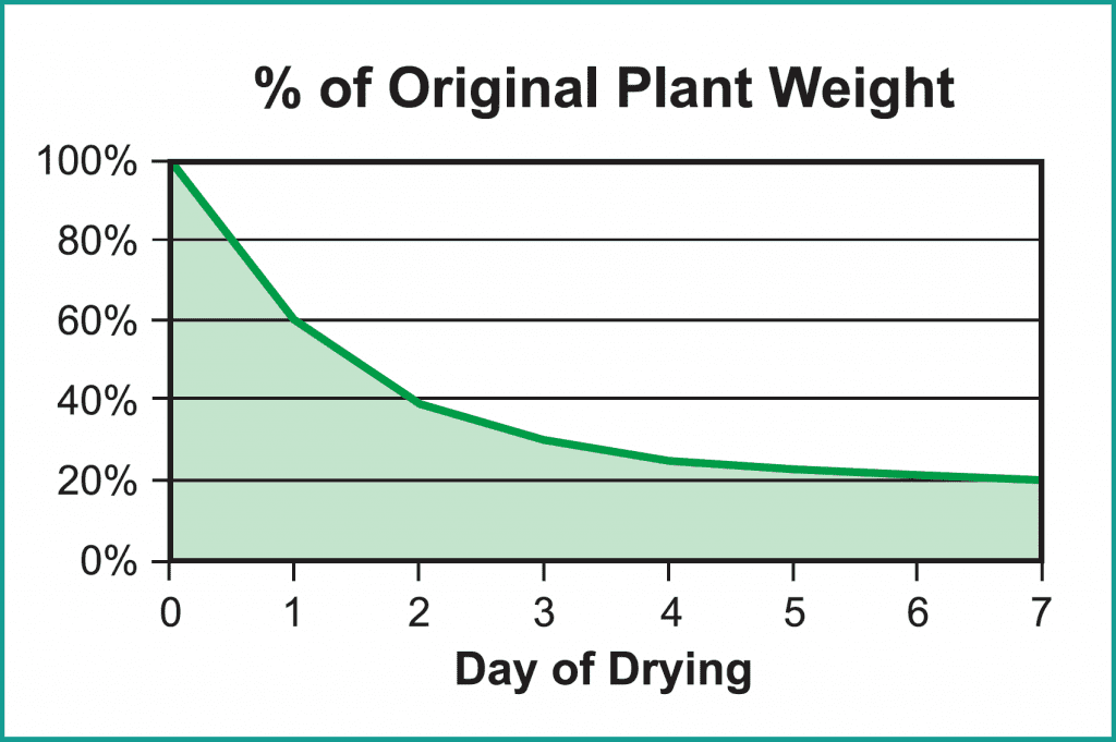 Graphic: percentage of original plant day versus days of drying cannabis